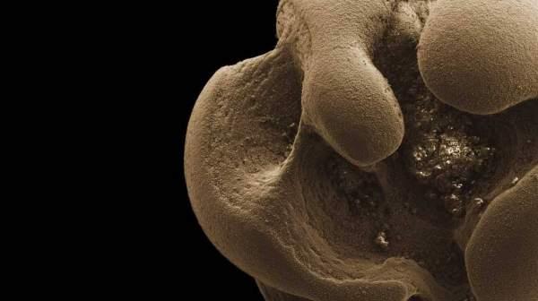 Микробиологи в Калифорнийском технологическом институте обнаружили бактерии, которые питаются металлическим марганцем